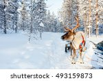 reindeer in a winter forest in... | Shutterstock . vector #493159873