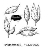 bay leaf vector hand drawn