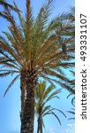 palm trees on a beach in the... | Shutterstock . vector #493331107