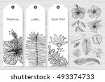 tropical cards collection. set... | Shutterstock .eps vector #493374733
