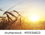 Nature Oats Field Autumn Sunse...