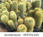 Cactus Plant In The Sun With...