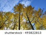 radiant sun shining through the ... | Shutterstock . vector #493822813