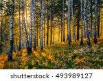 autumn sunset in the siberian... | Shutterstock . vector #493989127