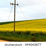 blur in south africa close up... | Shutterstock . vector #494043877