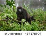 front view of mountain gorilla... | Shutterstock . vector #494178907