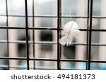 pigeon's feather and cobweb on... | Shutterstock . vector #494181373