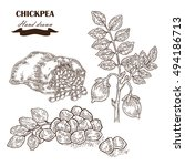 hand drawn chickpea plant.... | Shutterstock .eps vector #494186713