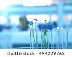 flower in test tubes glassware  ... | Shutterstock . vector #494229763