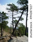 Small photo of En route on the hiking trail to popular cascade Piscia di Gallo - Rocks, footpath and large pine trees; Alta Rocca Mountains, Corsica, France
