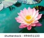 beautiful lotus flower | Shutterstock . vector #494451133