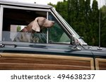 Small photo of Brown hunting dog with hanging ears peeking out of a window of moving on the road crossover with wooden panels against the wind
