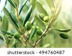 olive branch with leaves and... | Shutterstock . vector #494760487
