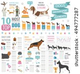 dog info graphic template.... | Shutterstock .eps vector #494777287