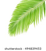 green leaves of palm tree... | Shutterstock . vector #494839453
