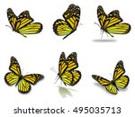 beautiful six yellow monarch... | Shutterstock . vector #495035713
