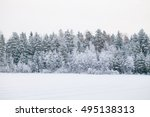 frosted pine trees along field | Shutterstock . vector #495138313
