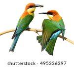 pair or chestnut headed bee...   Shutterstock . vector #495336397