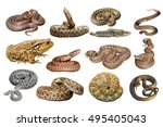 collection of herpetofauna ... | Shutterstock . vector #495405043