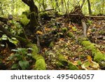 Autumn Forest With Mossy Trunk...