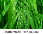 water drops on fresh green... | Shutterstock . vector #495433003