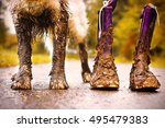 Muddy Dog Stands Next To His...