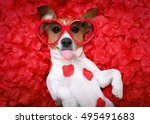 jack russell  dog sticking out... | Shutterstock . vector #495491683