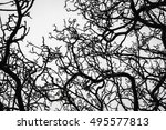 dead tree isolated on white... | Shutterstock . vector #495577813
