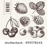 hand drawn sketch style berries ...