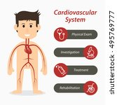 cardiovascular system and...   Shutterstock .eps vector #495769777