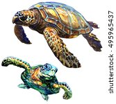 Small photo of Sea green turtle isolated, set, watercolor illustration on white
