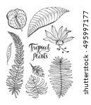 hibiscus  monstera ... | Shutterstock .eps vector #495997177