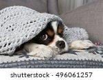 cute dog under the warm grey... | Shutterstock . vector #496061257