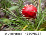 Small photo of Red Amanita in the forest