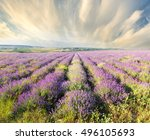 meadow of lavender. nature... | Shutterstock . vector #496105693