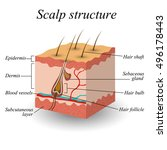 the structure of the hair scalp ... | Shutterstock .eps vector #496178443