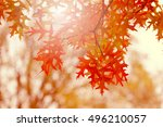 Autumn Scene With Oak Leaves....