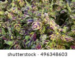 Colorful Patterned Leaves Of...