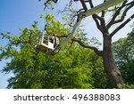 Gardener Tree Surgeon Pruning A - Fine Art prints