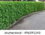 Small photo of Green Bush fence. Seamless Tile able Texture.