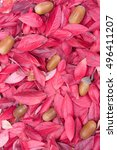 Small photo of Decorative autumn leaf, acorn background composition. Background texture of different autumn leaves, oak acorns. Pink, red, yellow, orange, brown, purple colors. Beautiful backdrop. Toned picture.
