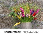 Colorful Gladiolus Flowers In...