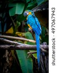 Blue Macaw On Branch With Gree...