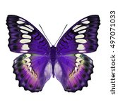 beautiful purple butterfly... | Shutterstock . vector #497071033