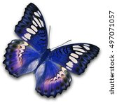 beautiful blue butterfly flying ... | Shutterstock . vector #497071057