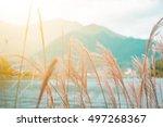 landscape in autumn season with ... | Shutterstock . vector #497268367