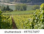 Small photo of St. Goarshausen, Germany - September 15, 2016 - Vineyards near Loreley rock in german rhine valley