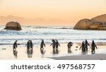 African Penguins On The Sandy...