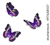 beautiful three purple...   Shutterstock . vector #497638537
