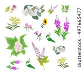 set of drawing wild flowers ... | Shutterstock . vector #497665477